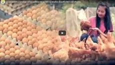 กระทรวงเกษตรฯ ดำเนินการรักษาเสถียรภาพราคาไข่ไก่มาต่อเนื่อง ตั้งแต่ปี 2561 จนถึงปัจจุบัน